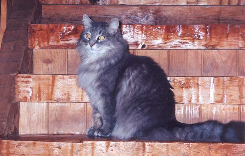 Photograph of Dusty Cat on stairs